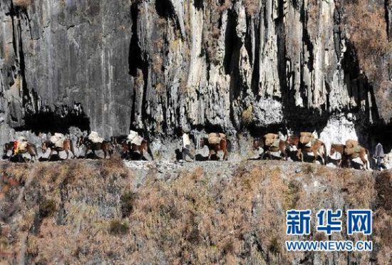 悬崖绝壁间的茶马古道