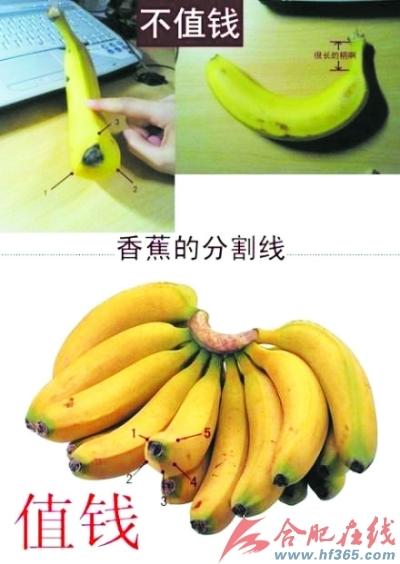 """网友称:""""芭蕉有三个棱,香蕉有五个棱;芭蕉柄长,香蕉柄短。"""" 上图为芭蕉,下图为香蕉(图片来自网络)"""