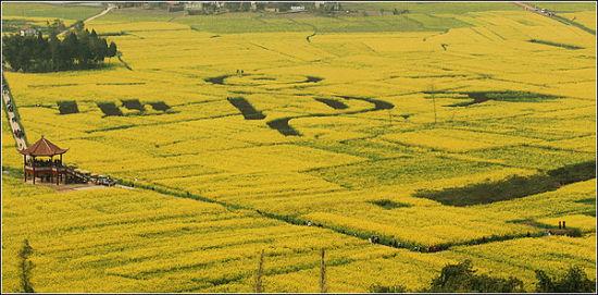 潼南是重庆西部的一个油菜种植大县,全县种植面积为30余万亩,其中,崇龛油菜种植基地种植面积达到3万余亩。从2008年开始,潼南县在崇龛举办每年一届的重庆潼南中国西部绿色菜都菜花节。在政府引导,市场主导模式下,通过三年打造,潼南菜花节开始成为川渝地区闻名的旅游品牌。通过油菜花节,当地加大招商引资、投资、融资力度,正在形成以油菜花为重点的一系列产业链。   五月:密云