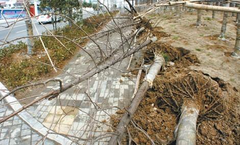 处于电力设施保护区,有的树枝已接近了高压线,一刮风就会碰到高压线
