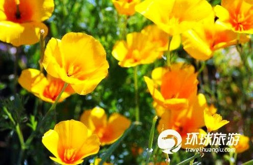 亚利桑那南部的野花