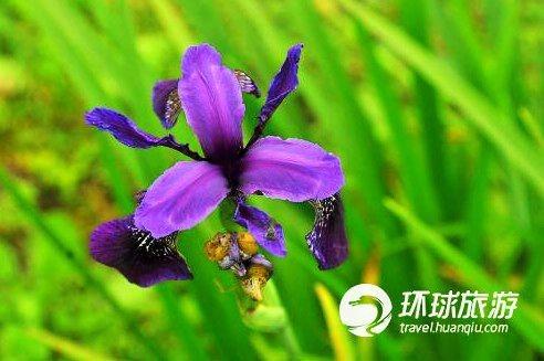 不丹的兰花
