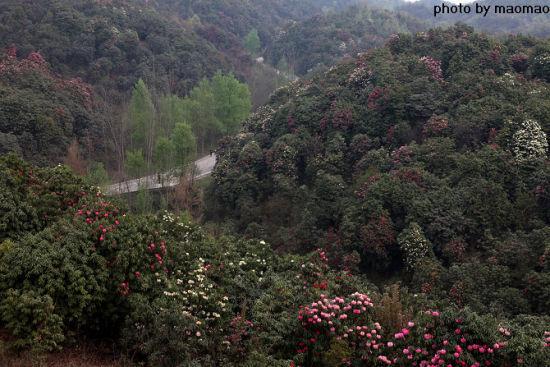 毕节杜鹃森林公园