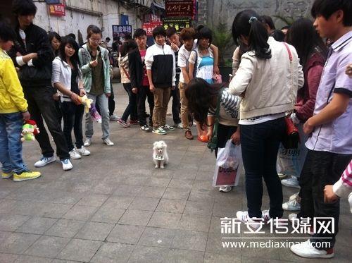 可爱的小狗引来众人围观