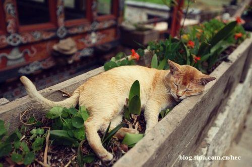 猫咪也如此幸福?