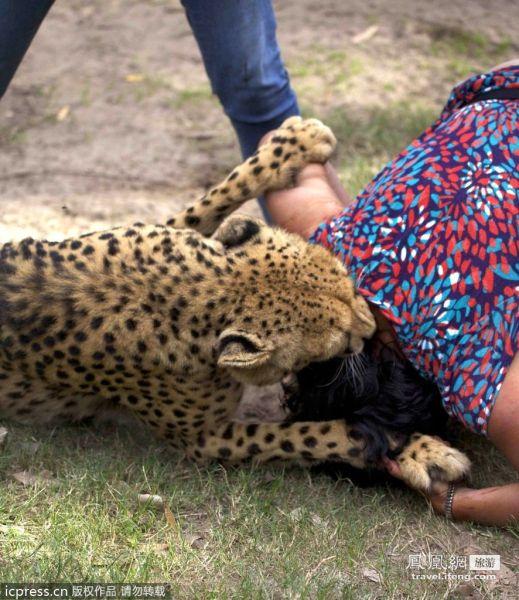 游客遭猎豹袭击