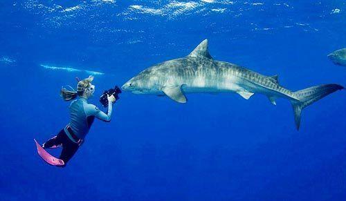 大胆女摄影师零距离与虎鲨共舞