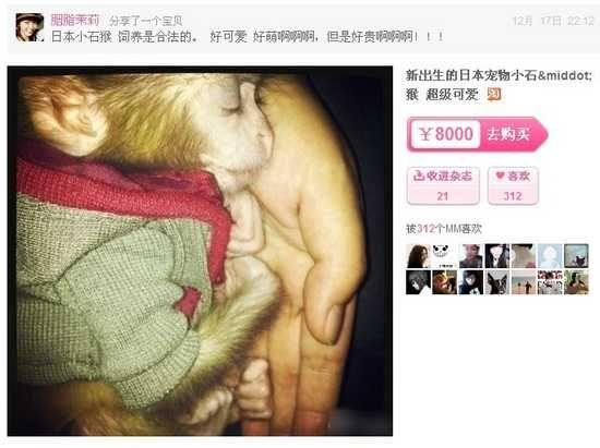 """网上贴出的""""日本袖珍石猴""""售卖广告,标价一只8000价格不菲。"""