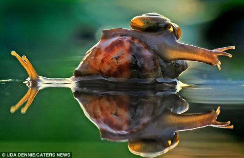 """蜗牛宝宝似乎在对着水面""""照镜子"""""""