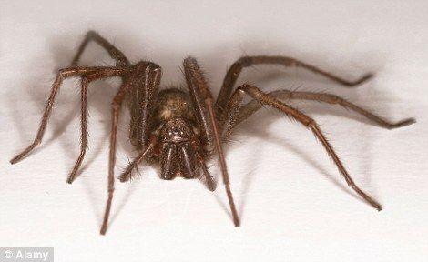 蜘蛛(资料图)