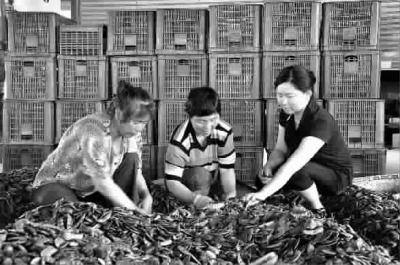 王黎娜(右一)指导农民分拣青扁豆