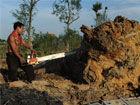 合肥98颗天价古树被砍