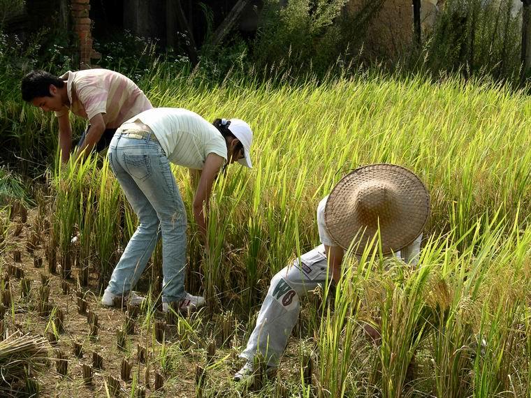 下乡支持农业