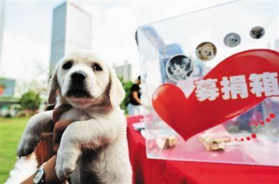 合肥犬业协会小动物关怀中心昨为猫