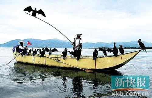 洱海上劳作的渔民