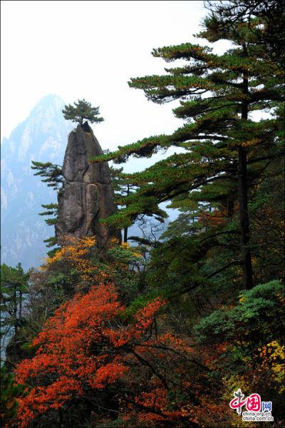 黄山奇松——梦笔生花。