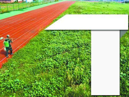 安徽巢湖体育场一直闲置,附近居民开发成大菜园。