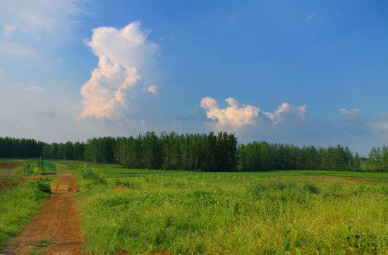 崔岗村的旷野
