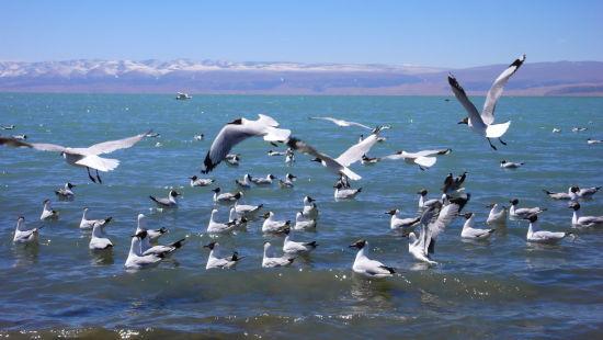 秋日青海湖