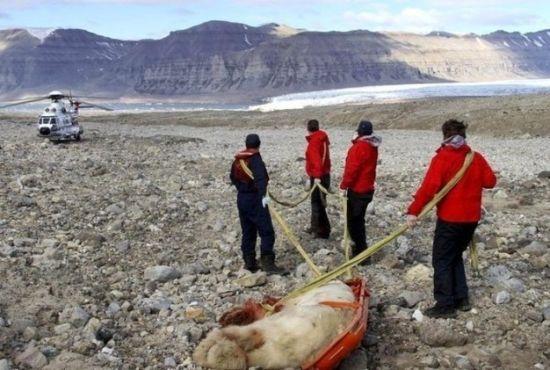 北极熊袭击游客事件