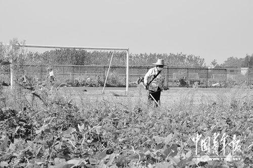 9月5日,巢湖体育中心田径场上,工人正在锄草。本报记者 慈鑫 摄