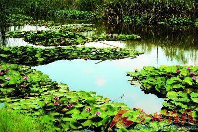 来到滨湖湿地森林公园