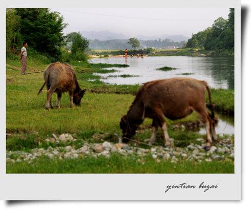 草地、水牛、河流