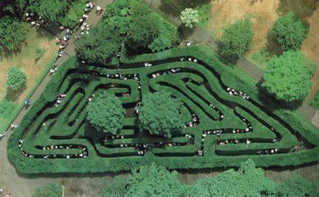 英国最古老的树篱迷宫