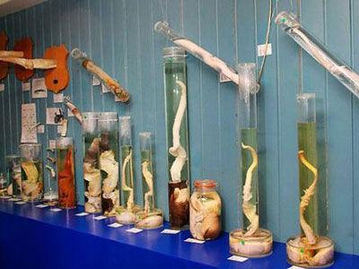 冰岛生殖器博物馆