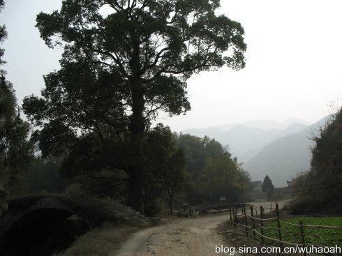 古寨入口:拱桥、古树