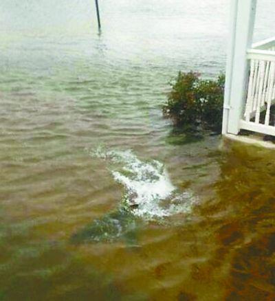 """10月29日,飓风""""桑迪""""登陆美国东部,部分地区遭水淹。网友上传了一张新泽西州居住区现鲨鱼的照片。 央视截图"""
