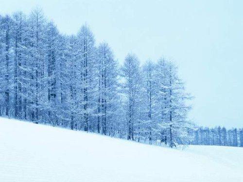 天山雪岭云杉林