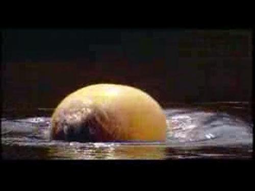然而它没想到的是膨胀鱼能在一两秒钟内瞬间充气膨胀,一下子就膨大15~20倍。