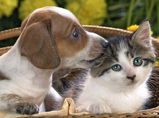 爆笑双语 真人神演绎猫和狗的区别