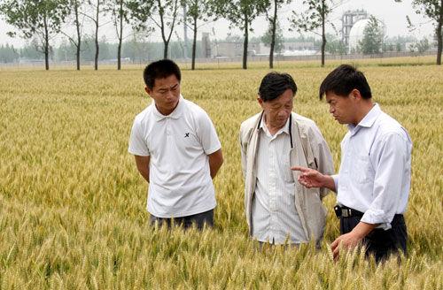 安徽农大教授胡承霖(中)与马传喜(右一)在指导农民。(资料图片)