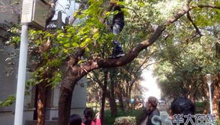 大学奇葩作业汇总:爬树、观尸体、演变态(图)