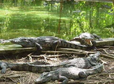 在肯尼亚天然动物园向鳄鱼池投掷物品必须自己捡回