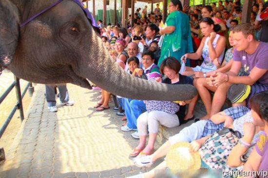抢香蕉的大象把mm吓得花容失色。