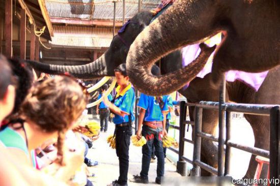 """大象的""""鬼"""""""