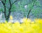 春日里的徽州乱花迷眼恍入桃源