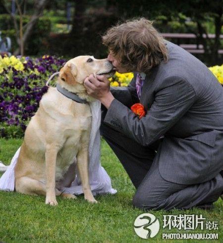 """澳一男子办婚礼上演""""人狗情未了"""""""