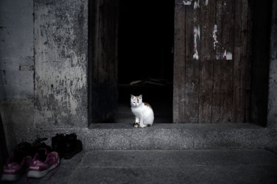 门口悠闲的小猫