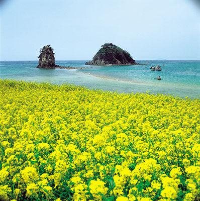 春天的济州岛