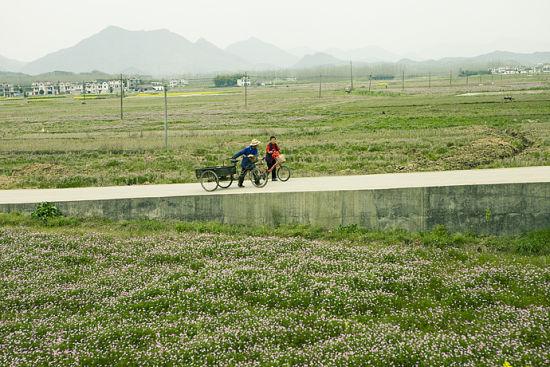 大片的紫云英田,两个老人走在这花海的堤坝上,春光正好。