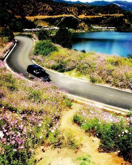 路边盛开的野花
