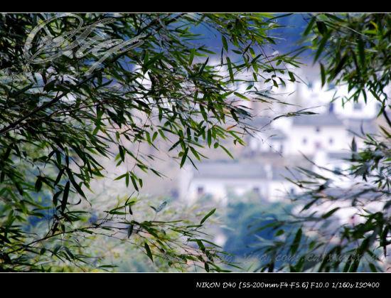 木坑竹海——透过竹海隐约看到的木坑村