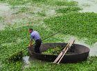 巢湖蓝藻泛滥