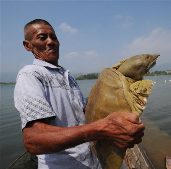 渔民方世奎在展示他捕获的甲鱼