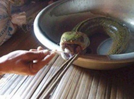 """越南一男子捕获""""怪鱼""""""""蛇头猪舌长相怪异"""
