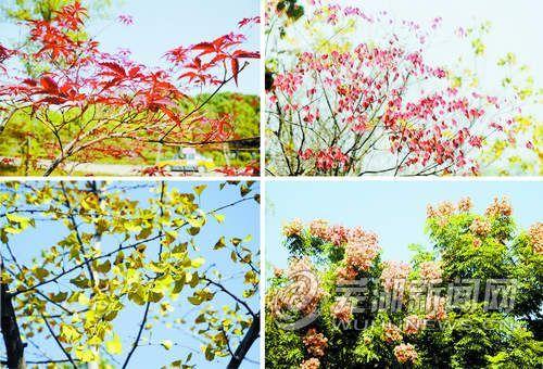 看芜湖的秋天如此斑斓多彩